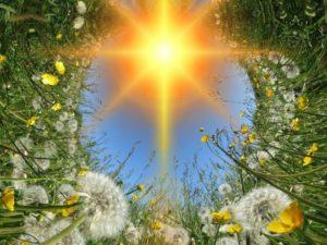 dandelions-419858_1280