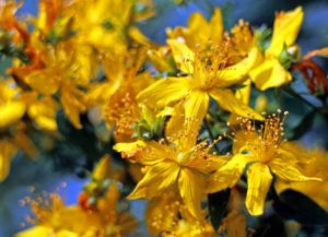 flower-374511_1280