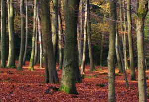 forest-402225_1280