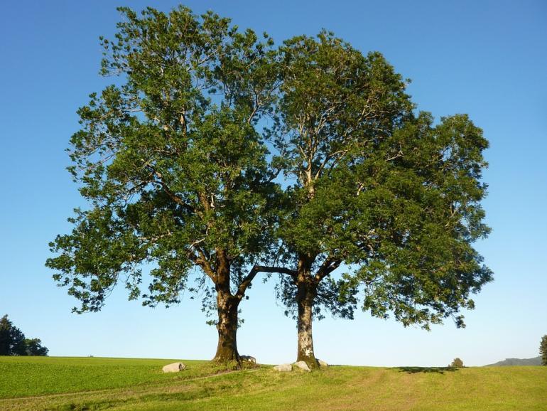Jasan, líska, ořešák - energie stromů