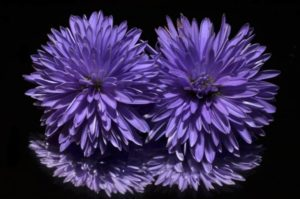 aster-188047_1280