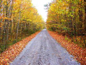 autumn-345322_1280