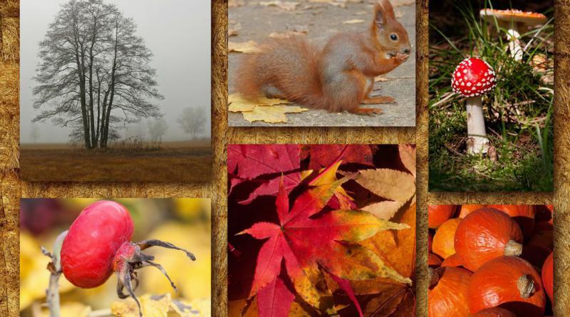 autumn-442222_1280