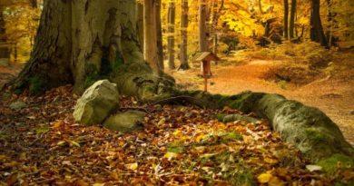 Borovice, olše, buk - energie stromů