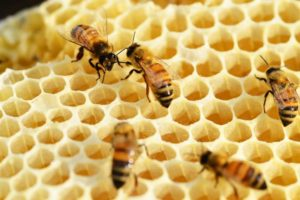 bees-352206_1280