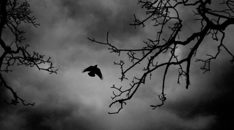 bird-22197_1280