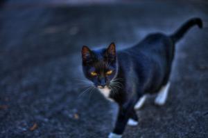 black-cat-211421_1280