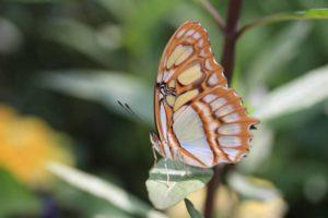butterfly-287575_1280