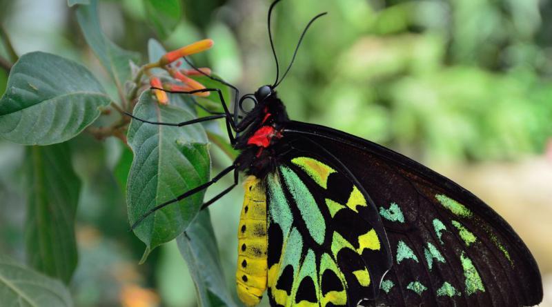 butterfly-339931_1280