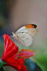 butterfly-363344_1280