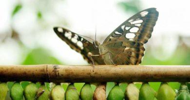 Věk Vodnáře, transformace vědomí