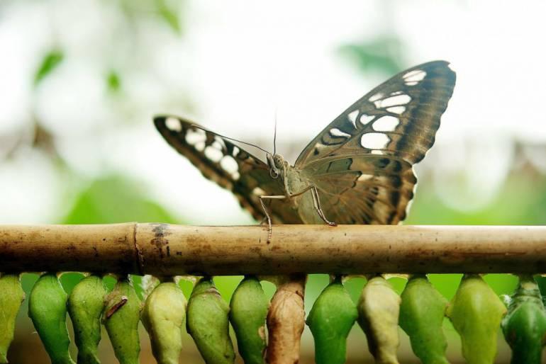 butterfly-dolls-165288_1280