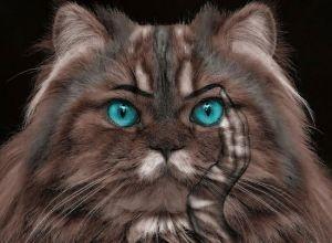 cat-381770_1280