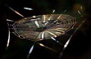cobweb-982412_1920
