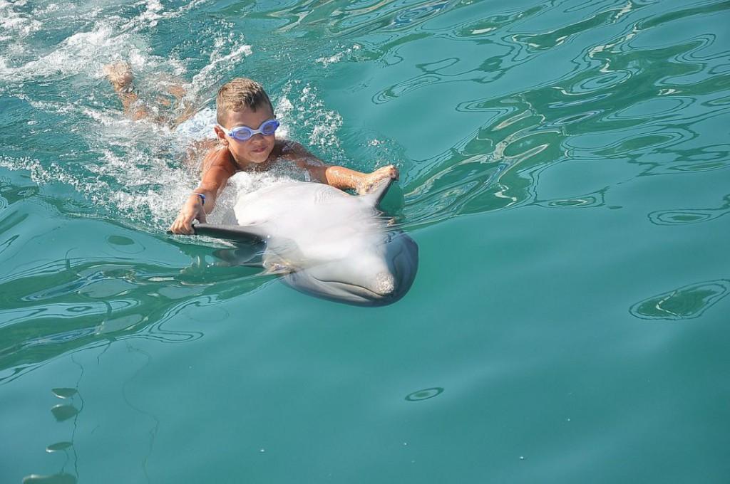delfin-639870_1280