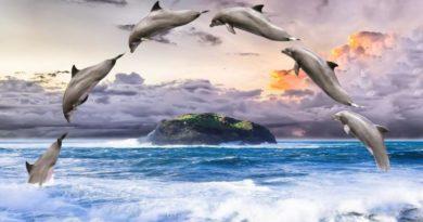 Symbol delfína - indigové děti