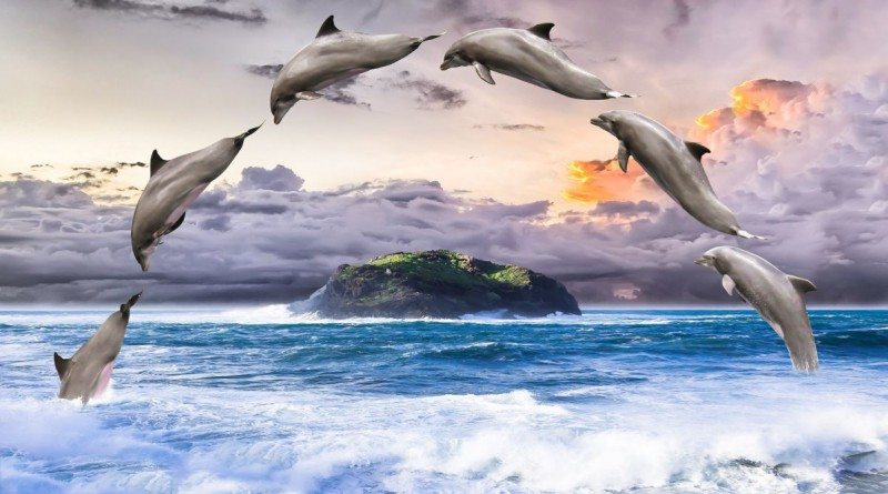 dolphin-1548405_1920