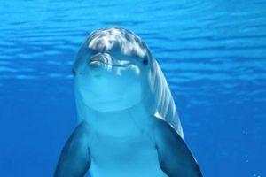 dolphin-203875_1280