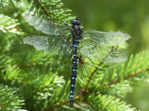 dragonfly-184165_1280