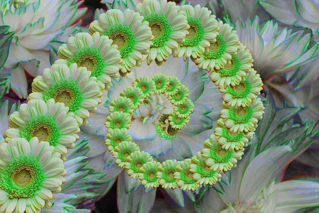 flower-1003098_1920