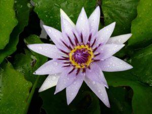flower-101026_1920