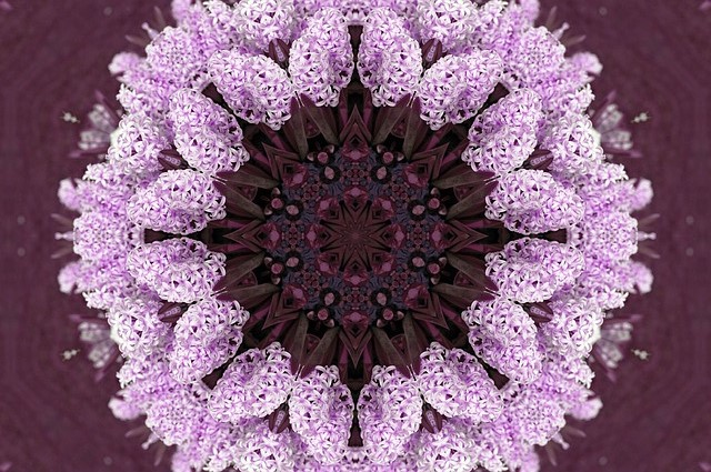 flower-14123_640