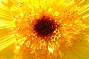flower-169852_1280