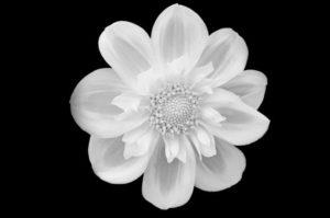 flower-219963_1280