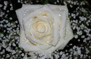 flower-22434_1280