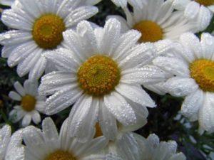 flower-367844_1280