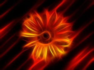 flower-76334_1280