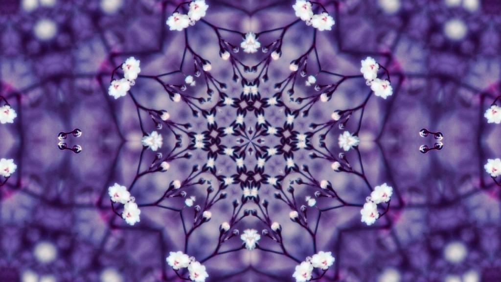 flowers-1548796_1280