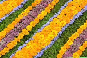 flowers-1591474_1920
