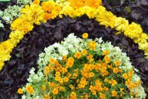 flowers-1591477_1920