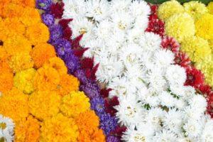 flowers-1591487_1920