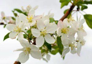 flowers-165071_1280