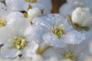 flowers-61691_1280