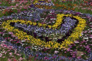 flowers-620759_1280