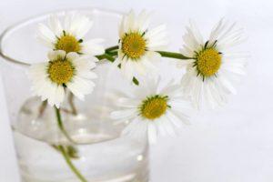 flowers-646644_1280