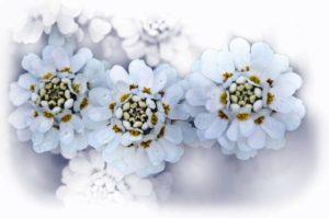 flowers-70655_1280