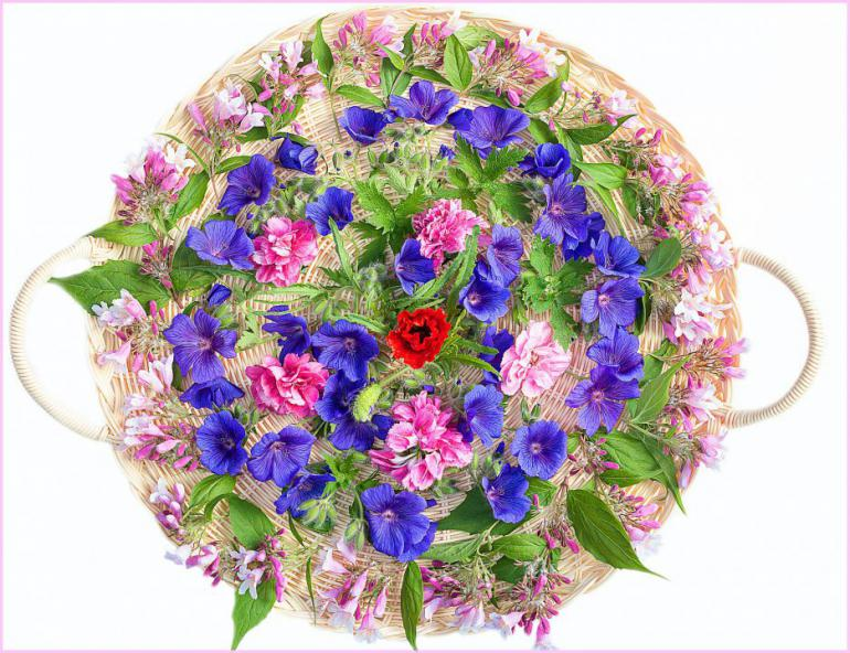 flowers-834191_1920