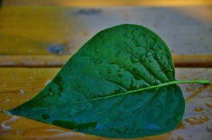 leaf-144143_1280