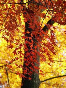 leaves-76849_1280