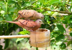 love-dove-93144_1280