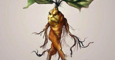 Kouzelná mandragora lékařská
