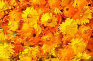 marigold-237828_1280