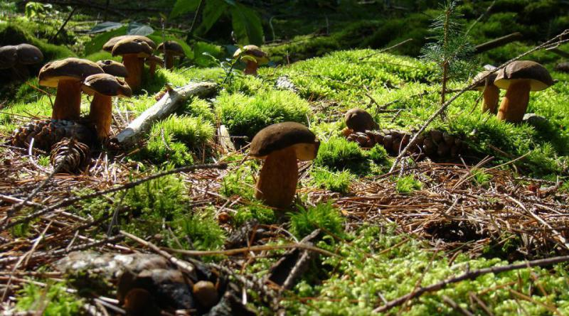 mushrooms-465526_1280