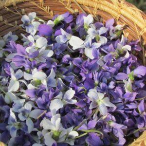 petals-414885_1280