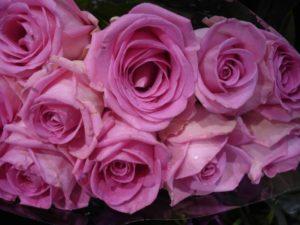 pink-208813_1280
