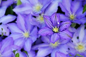 purple-flower-338730_1280